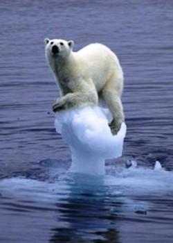 지구온난화로 해빙이 다량 녹아버리면서 북극곰이 머물러 있을 곳을 찾지 못하고 위태롭게 남은 얼음에 매달려 있다. - flickr 제공